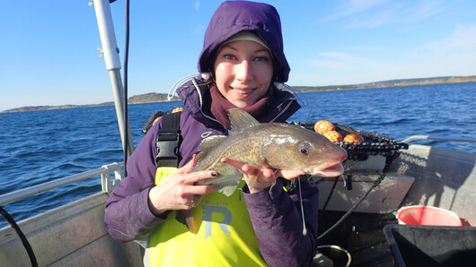 Photo of Ann-Elin Wårøy Synnes on a boat holdning a cod.